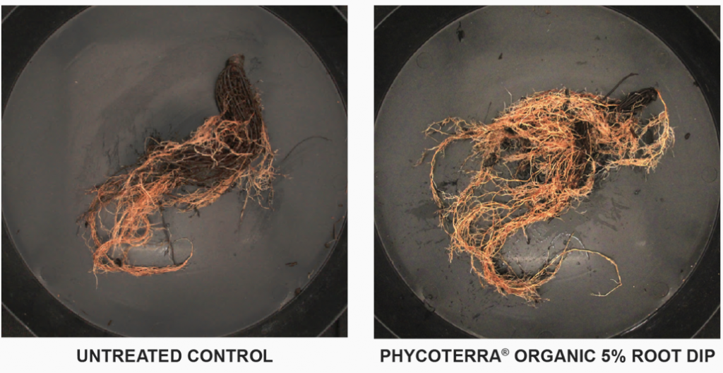 PhycoTerra Root Growth